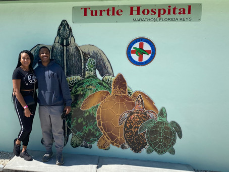 Turtle Hospital - Key West, FL
