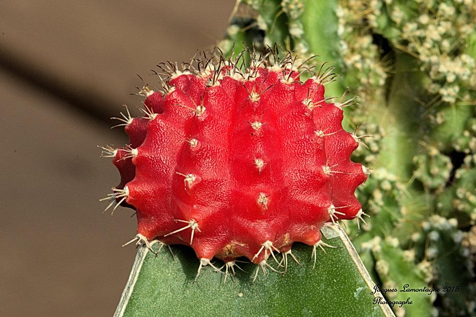 CactusFloralie.jpg