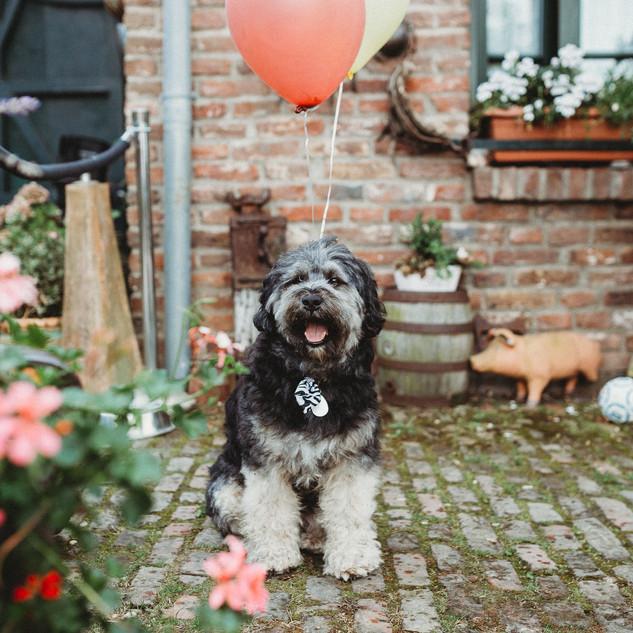 Hochzeitsfoto Hund