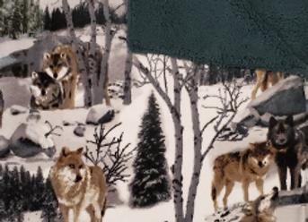 Wolf Photo Real Anti-Pill Plush Fleece Blanket