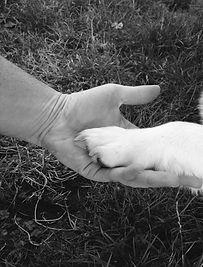 Nathalie Izoard, ostéopathie animale, Communication animale, Stretching équin et canin, formations, énergétique, France - Lyon - Rhone Alp s - Marseille - PACA