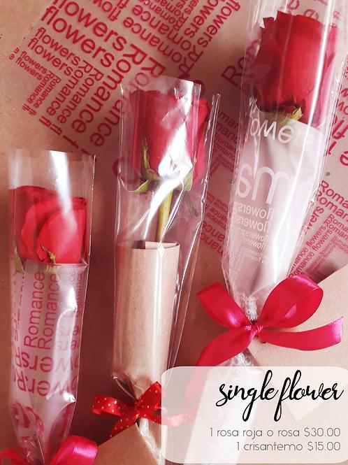 Single flowers 1 Rosa roja o rosa
