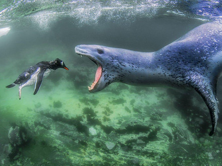 Seals- the angelic creature of the sea