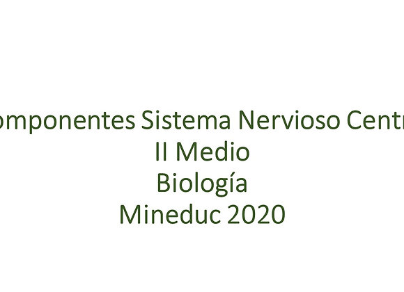 Componentes Sistema Nerviosos Central