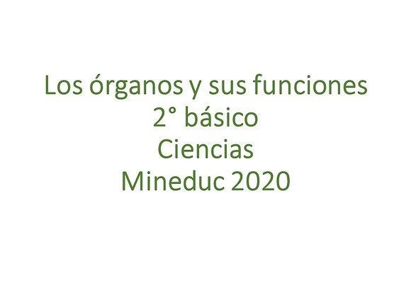 Los órganos y sus funciones