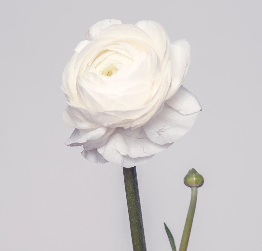 Flowers-33_edited_edited.jpg