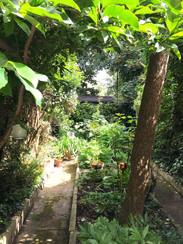 Lothar's garden in Forest Gate