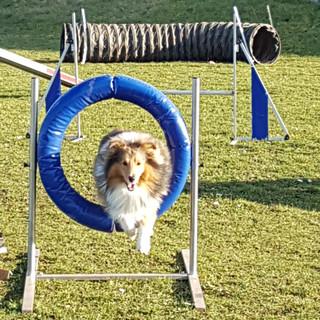 agility_club_canin_18.jpg