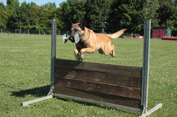 obeissance_chien_obstacle_haltere