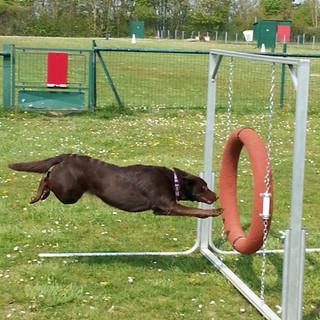 agility_club_canin_07.jpg