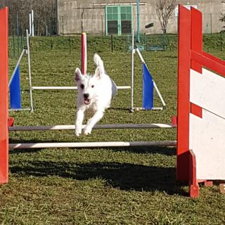 agility_club_canin_22.jpg