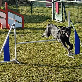 agility_club_canin_19.jpg