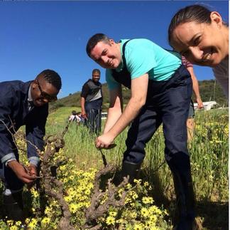 team building pruning vines