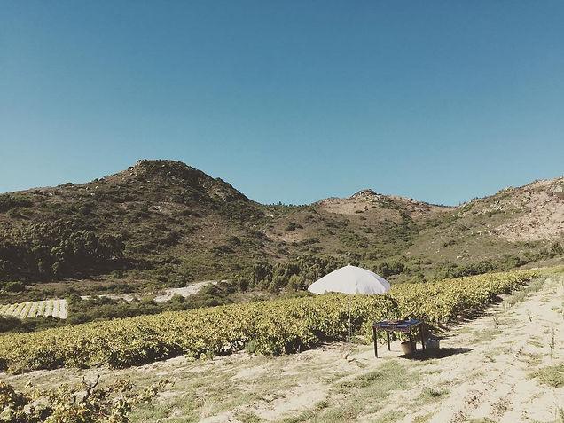 vineyard wine tasting set up.jpg