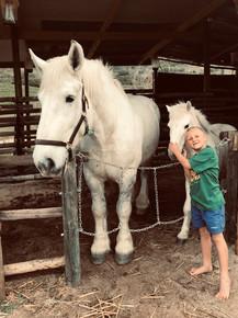 kids horses