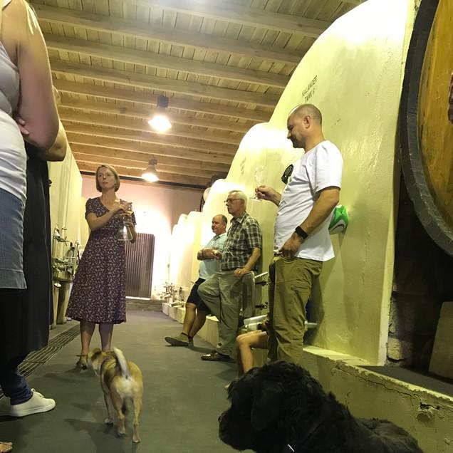 cellar tasting with dog