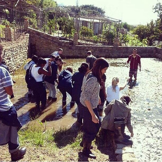 team building waterblommetjie picking