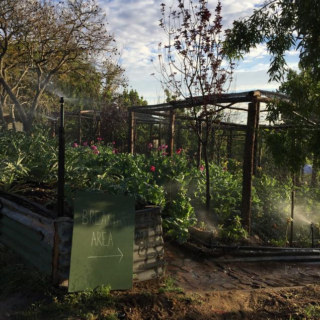 veggie garden breakfast