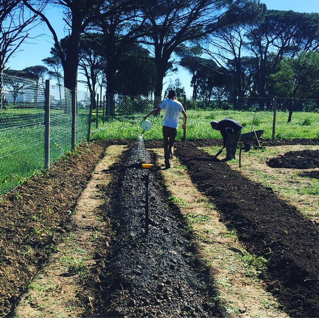 Gardening with Food and Trees for Africa