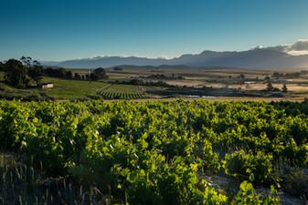 cottage views vineyards
