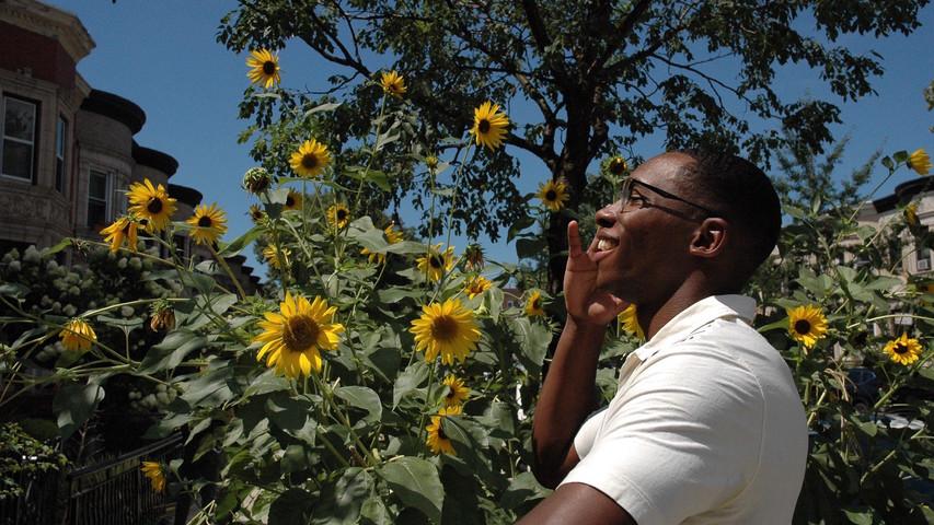 Sunflower Smile 2020.jpg