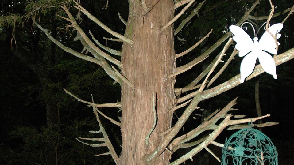 relief tree .jpg