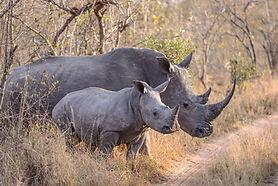 rhinos-mum-and-baby.jpg