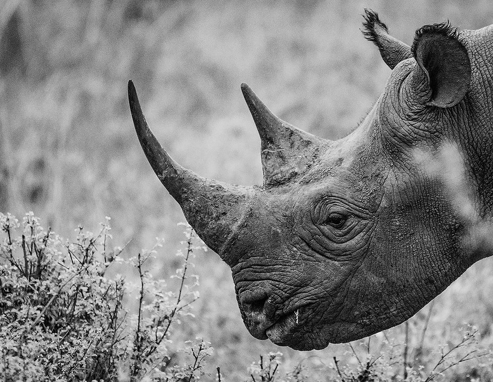 close up of a rhino with sad eyes