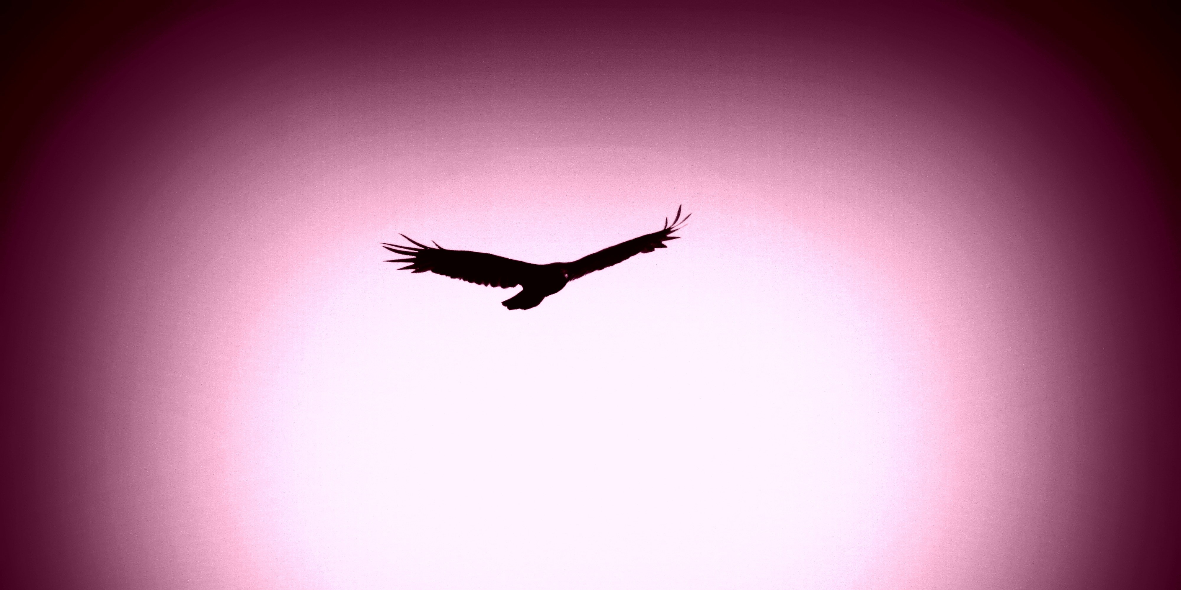 eagle-silhouette-on-a-light-purple-background2