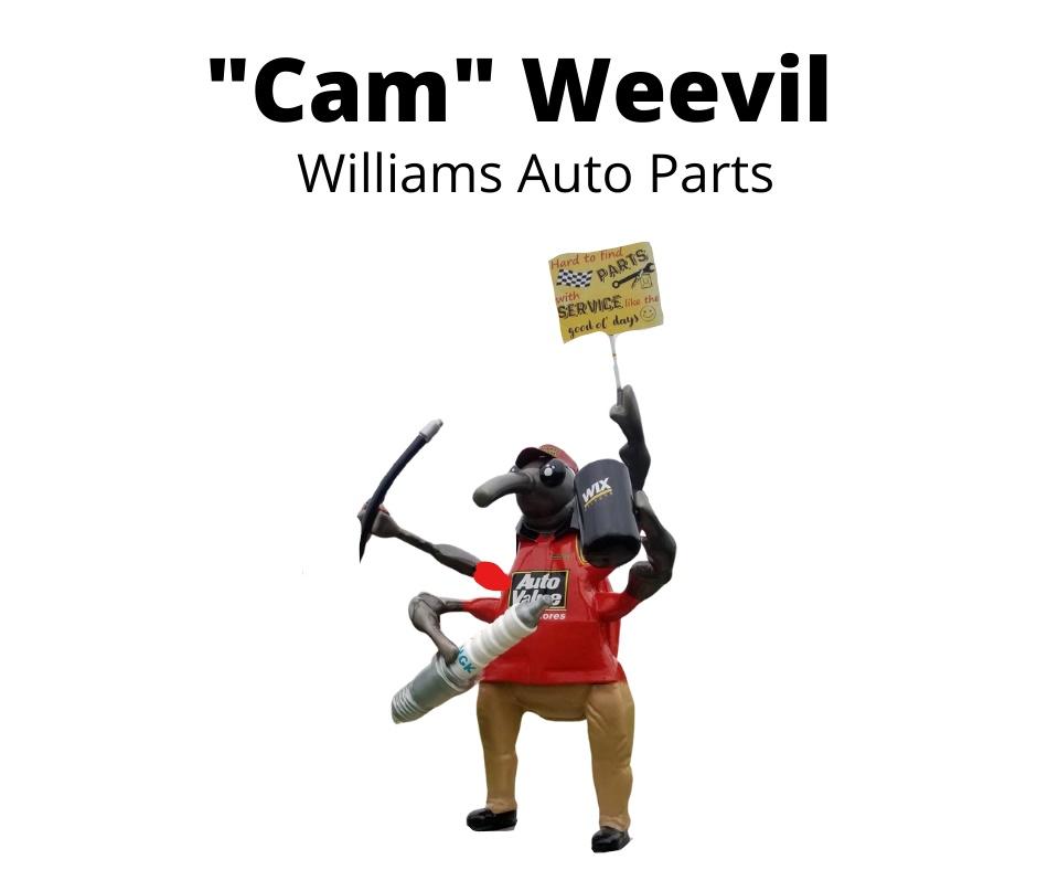 Cam_ Weevil