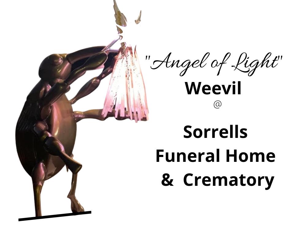 """Angel of Light"" Weevil"