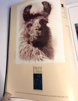 1st Job: Selling Llamas (sperm)