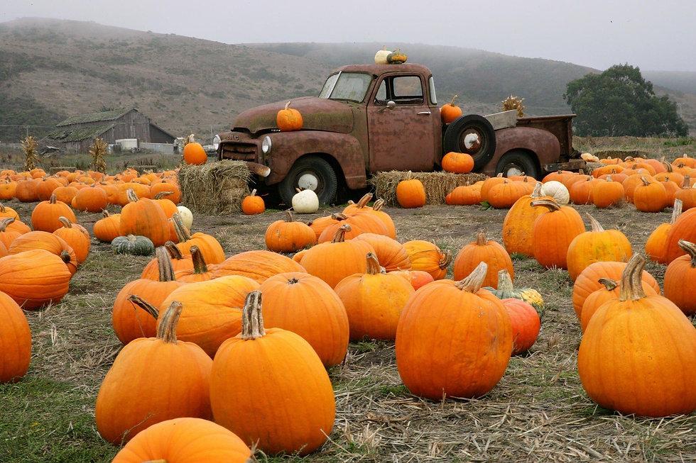pumpkin-patch-wallpaper-73451-76086-hd-wallpapers.jpg