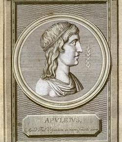 Asinus aureus