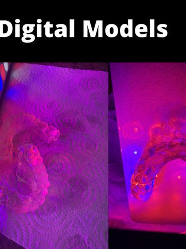 digital scans and models.png