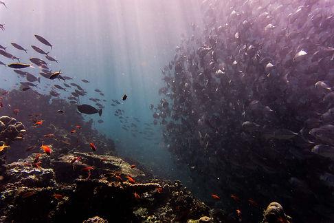 ocean data.jpg