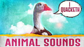 animal sounds.jpeg