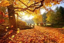 Fall Season Coming Soon