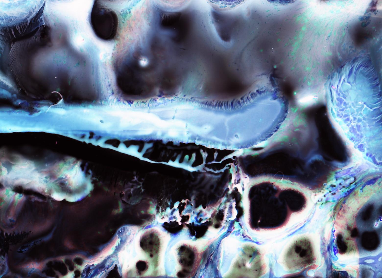 acid negatvie_0010.jpg