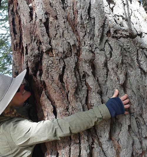 Dr. Jule Granger hugging a tree