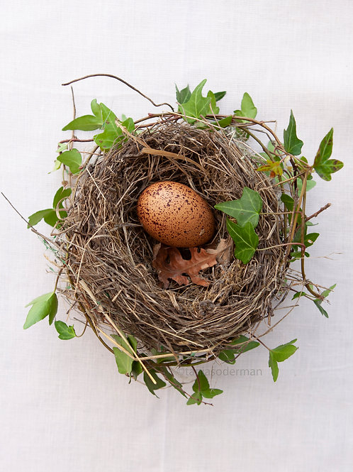 Brown eggs in nest with Ivy