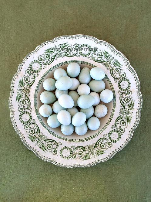 Quail eggs in green