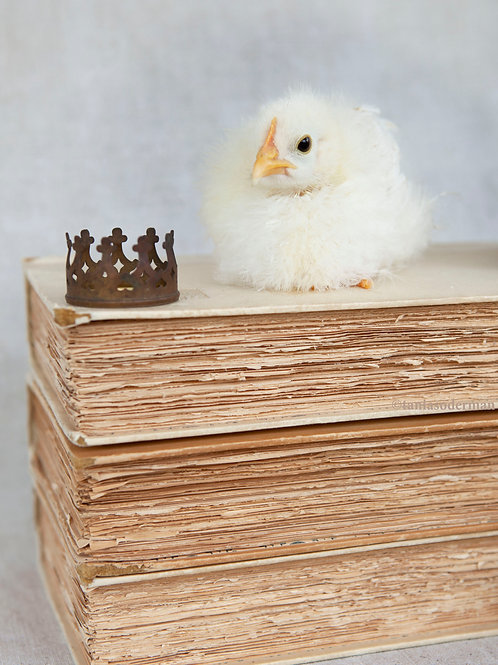 Liliy with crown on books