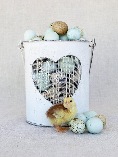 LOVE quail