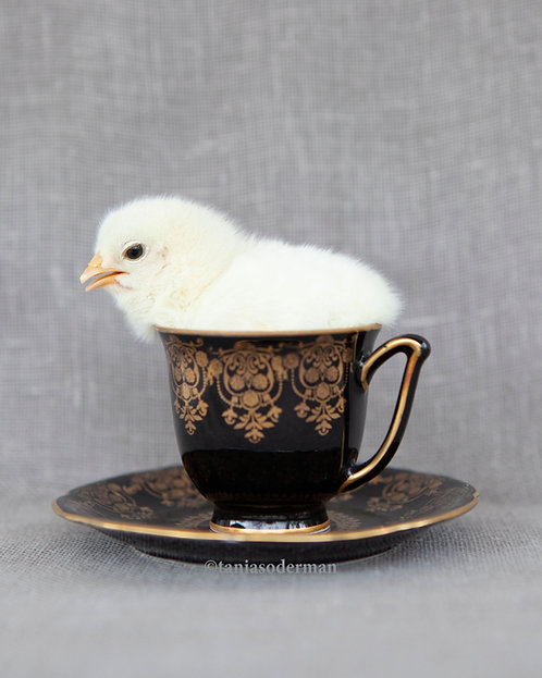 A little froth?