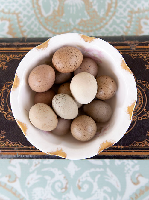 Quail eggs in bowl on bible