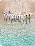 Aerial shot Surf Sports Board Group.jpg
