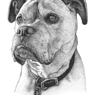 Cody - 8x10in Stippling