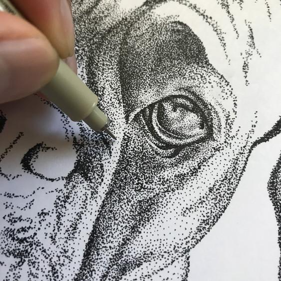 Leia Boxer Closeup