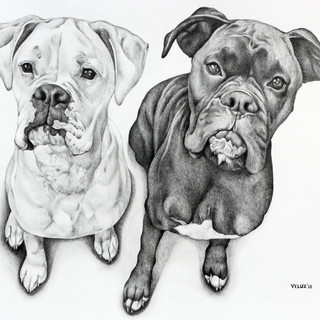 Diesel & Cassius - 16x20in Drawing